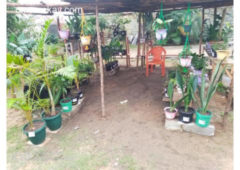 Gloryland Tropical Garden