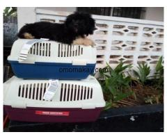 EUROPEAN PETS/DOGS